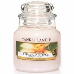 Yankee Candle Jar Glaskerze klein 104g Champaca Blossom