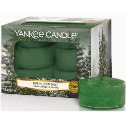 Yankee Candle Teelichter 12er Pack Evergreen Mist